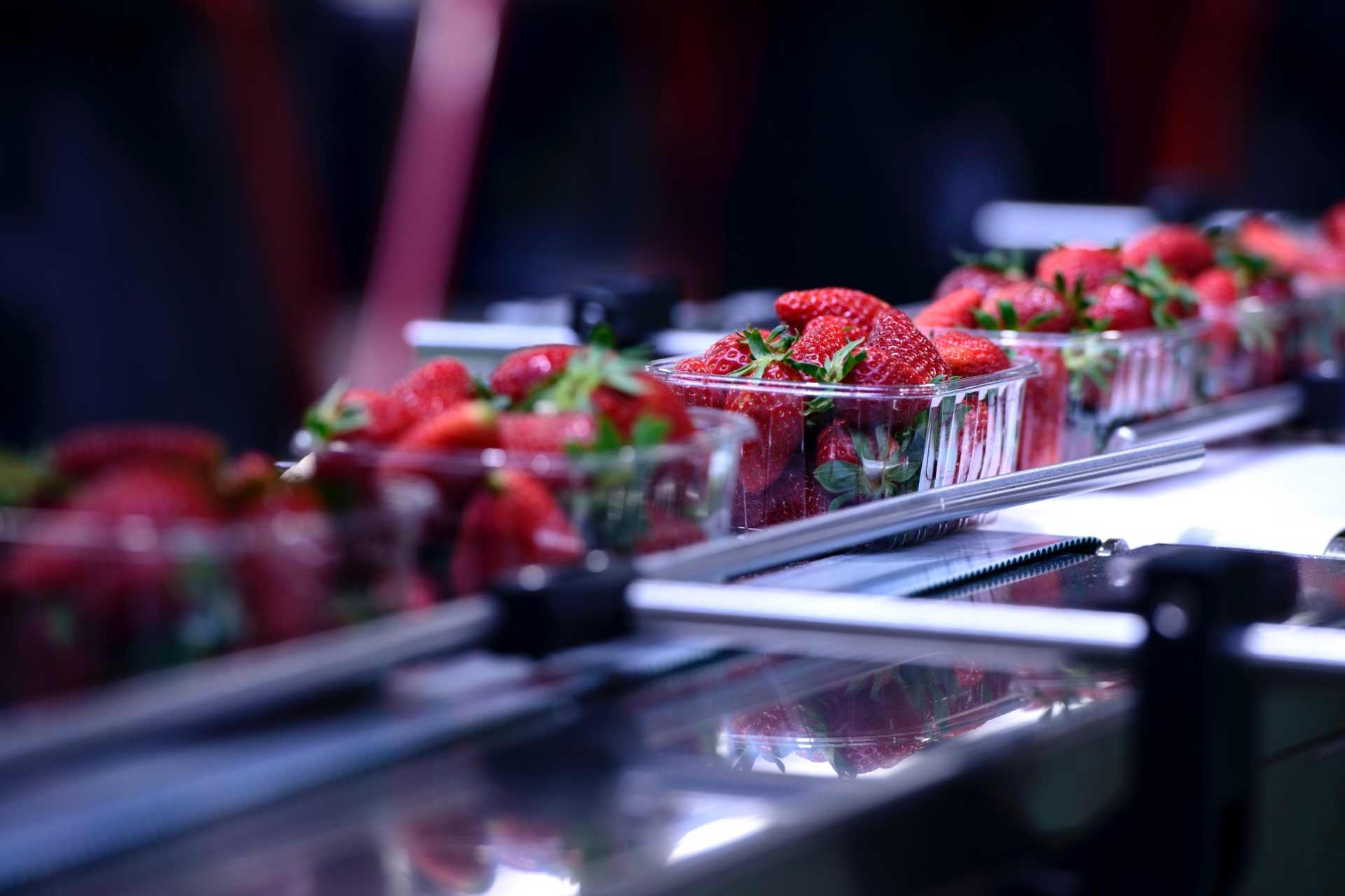 Proizvodnja mašina za obradu voća i povrća i pekarske opreme